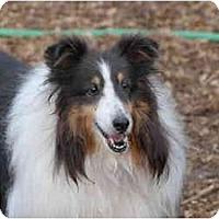 Adopt A Pet :: Michelle - Ft. Myers, FL
