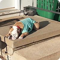 Adopt A Pet :: Roxy - Decatur, IL