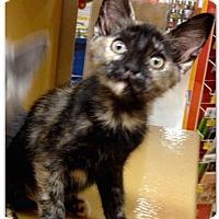 Adopt A Pet :: Pocahontas - Colmar, PA
