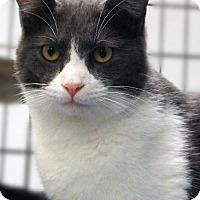 Adopt A Pet :: SPUNKY BOY - Toledo, OH