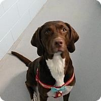 Adopt A Pet :: Lizzie - Muskegon, MI