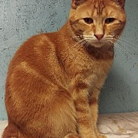Adopt A Pet :: AJ - Brainardsville, NY