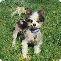 Adopt A Pet :: GUY - Nampa, ID