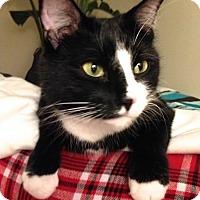 Adopt A Pet :: Wilson - Lambertville, NJ