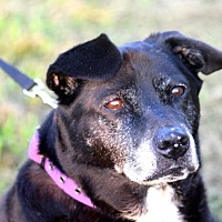 Labrador Retriever Mix Dog for adoption in McKenzie, Tennessee - Sadie