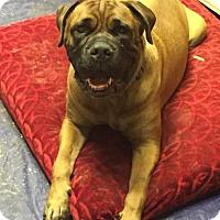 Adopt A Pet :: Chevy - Del Rio, TX