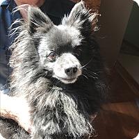 Adopt A Pet :: Tigg - Grand Rapids, MI