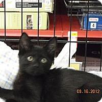 Adopt A Pet :: Midnight - Riverside, RI