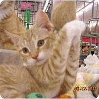 Adopt A Pet :: Lance - Riverside, RI
