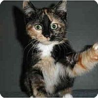 Adopt A Pet :: Big E Small - Milwaukee, WI