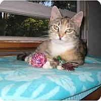 Adopt A Pet :: Molly - Mount Laurel, NJ