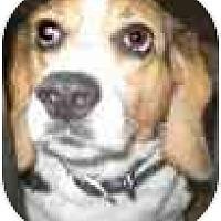 Adopt A Pet :: Spartacus - Portland, OR