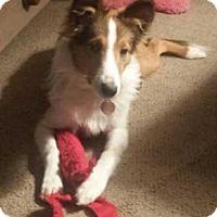 Adopt A Pet :: Fergus - Abingdon, MD