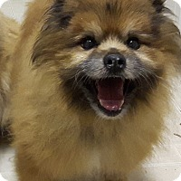Adopt A Pet :: Remy - Cambridge, ON