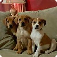 Adopt A Pet :: Bear Ducky and Buttercup - Marlton, NJ