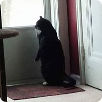 Adopt A Pet :: Elvis - Fairborn, OH