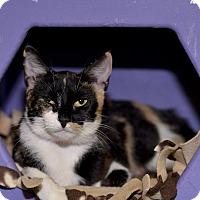 Adopt A Pet :: Callee - Medina, OH