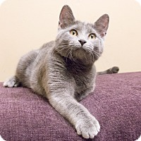 Adopt A Pet :: Dagmar - Chicago, IL