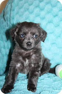 Mixed Breed (Medium) Mix Puppy for adoption in Kalamazoo, Michigan - Nike - Kelli B.