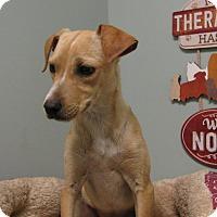 Adopt A Pet :: Leggs - Groton, MA