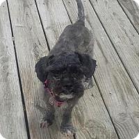 Adopt A Pet :: BeBe - Buffalo, NY