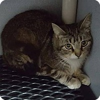 Adopt A Pet :: Charity - Mount Sterling, KY