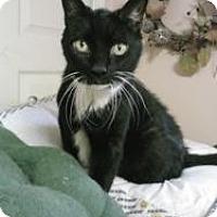 Adopt A Pet :: Maude - bloomfield, NJ