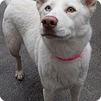 Adopt A Pet :: Husky Mix - Aloha, OR