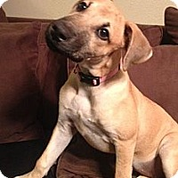 Adopt A Pet :: Shelby - Houston, TX