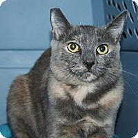 Adopt A Pet :: Needs Barn Home - Santa Rosa, CA