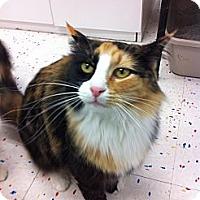 Adopt A Pet :: Julissa - Phoenix, AZ