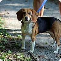 Adopt A Pet :: Juju - Tinton Falls, NJ