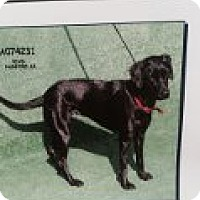 Adopt A Pet :: DOLLY - Atascadero, CA