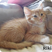 Adopt A Pet :: Riki - Bentonville, AR
