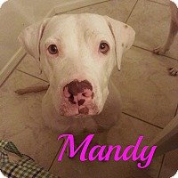 Adopt A Pet :: Mandy - Scottsdale, AZ