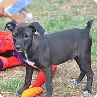 Adopt A Pet :: Pablo - Tumwater, WA