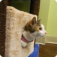Adopt A Pet :: Ivy - The Colony, TX