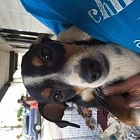 Adopt A Pet :: Timmy - Fresno, CA