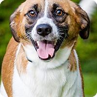 Adopt A Pet :: Koko - Owensboro, KY