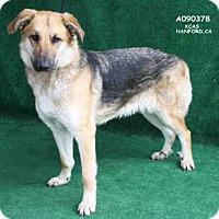 Adopt A Pet :: *SHERRY - Hanford, CA
