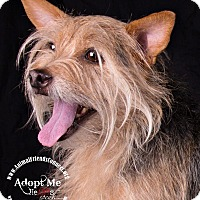 Adopt A Pet :: Frankie - Lodi, CA