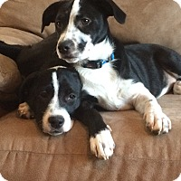 Adopt A Pet :: Thelma and Louise - Sagaponack, NY