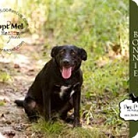 Adopt A Pet :: Bonnie - Lewisville, IN