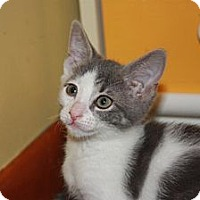 Adopt A Pet :: Parker (LE) - Little Falls, NJ