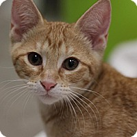 Adopt A Pet :: Mickie D - Sacramento, CA