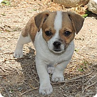 Adopt A Pet :: Max - La Habra Heights, CA