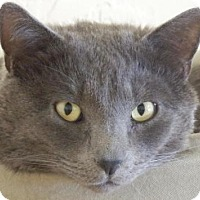 Adopt A Pet :: Smokey Cole - Prescott, AZ