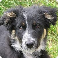 Adopt A Pet :: JENNI **video!** - Nampa, ID