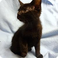 Adopt A Pet :: Egbert Theodore - Bentonville, AR