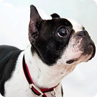 Adopt A Pet :: Thelma - Cumberland, MD